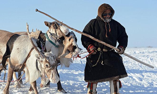 Оленеводам Ямала будут оказывать юридическую помощь на их родных языках