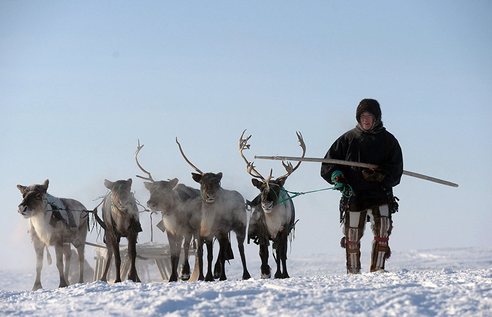 Over 143 million rubles earmarked to support reindeer herders in the Nenets Autonomous Area