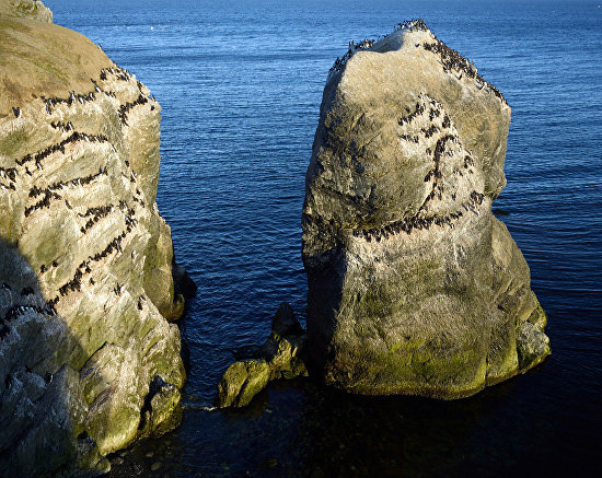 Кайры и другие птицы используют юго-западные берега Новой Земли для высиживания яиц из-за их защищенности от ветра и ориентации к солнцу. Но таких мест немного. 2016