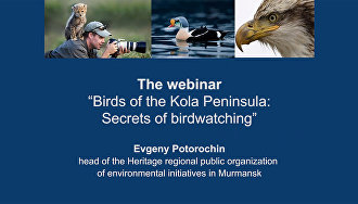 "The webinar ""Birds of the Kola Peninsula: Secrets of birdwatching"""