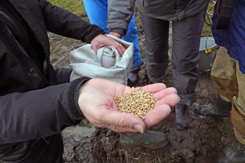 Слева: крупы, заложенные на хранение в вечную мерзлоту; справа: зерно, заложенное на хранение в вечную мерзлоту