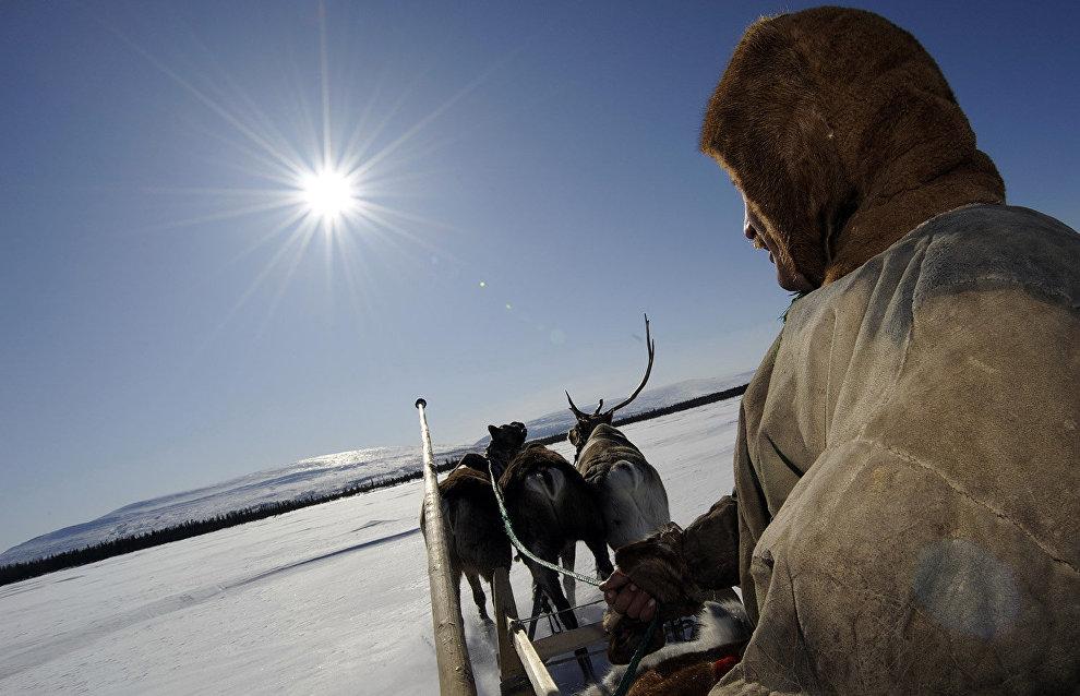 Chukotka reindeer herders awarded bonuses for successful work