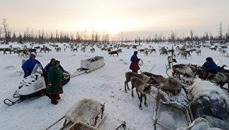 На Ямале проходит экспедиция по стойбищам оленеводов, факториям и отдалённым селам