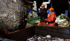 Federal Agency for Fishery: A new organization may be created to regulate Arctic fishing