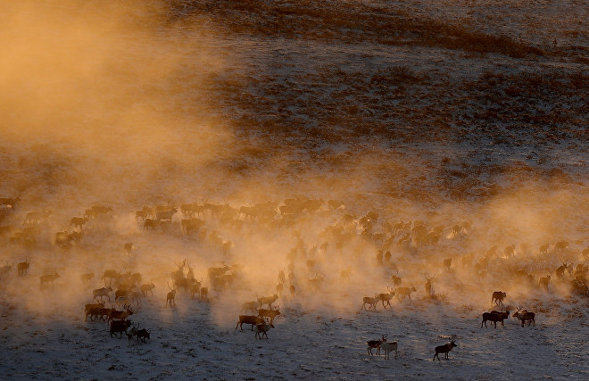 Scientists study the ice crust that affects reindeer pastures in northern Yamal
