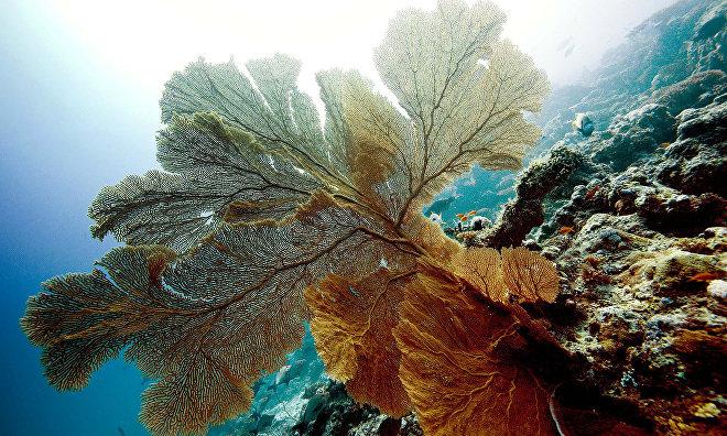 St. Petersburg State University launches new oceanology master's degree program