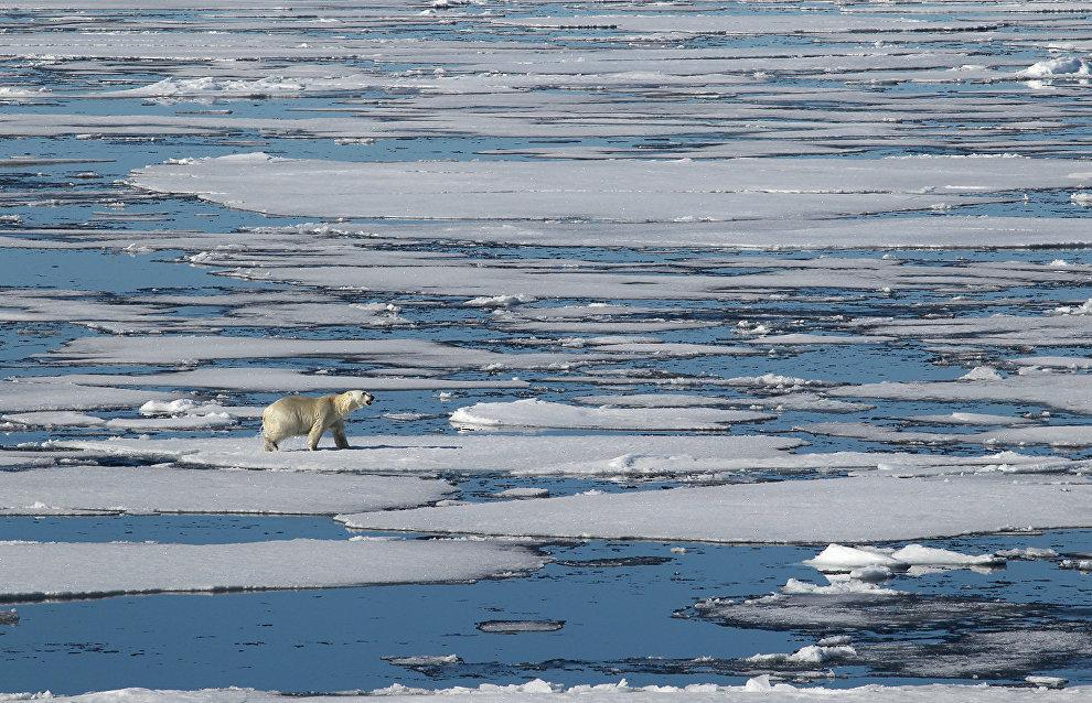 Россия и Дания могут разделить Северный полюс после одобрения заявок в ООН