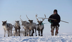 Meat standards: Naryan-Mar reindeer breeders and vets review rules for exporting meat to Europe