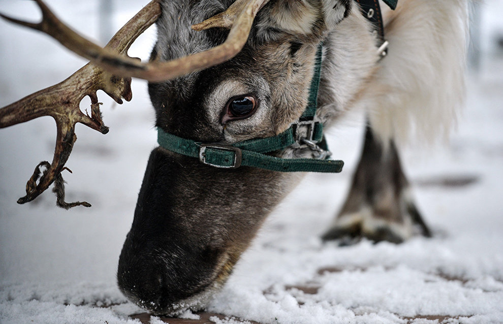 Animals can help preserve Arctic permafrost