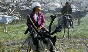 Yakutia's government institutes Reindeer Breeder Day