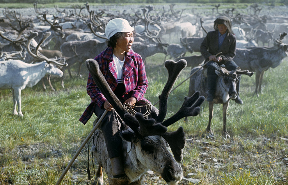 About 80% of Yamal reindeer population vaccinated against anthrax
