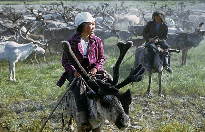 Учёные из России и Канады восстановят историю домашнего оленеводства в Арктике
