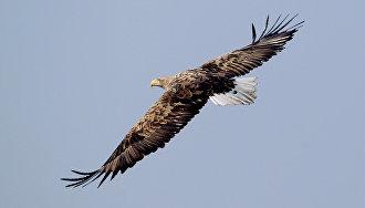 На Ямале пройдёт экспедиция по изучению хищных птиц