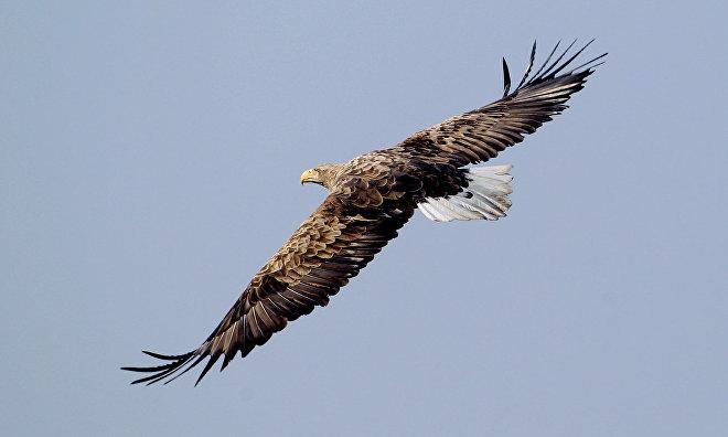 Expedition to study predatory birds to be held on Yamal Peninsula