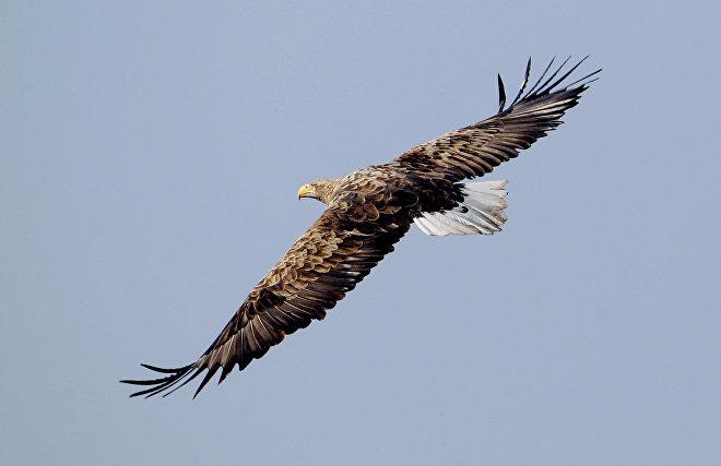 На Ямале проведут мониторинг численности редких хищных птиц