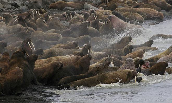 Норвегия намерена развивать сотрудничество с РФ в природоохранной сфере