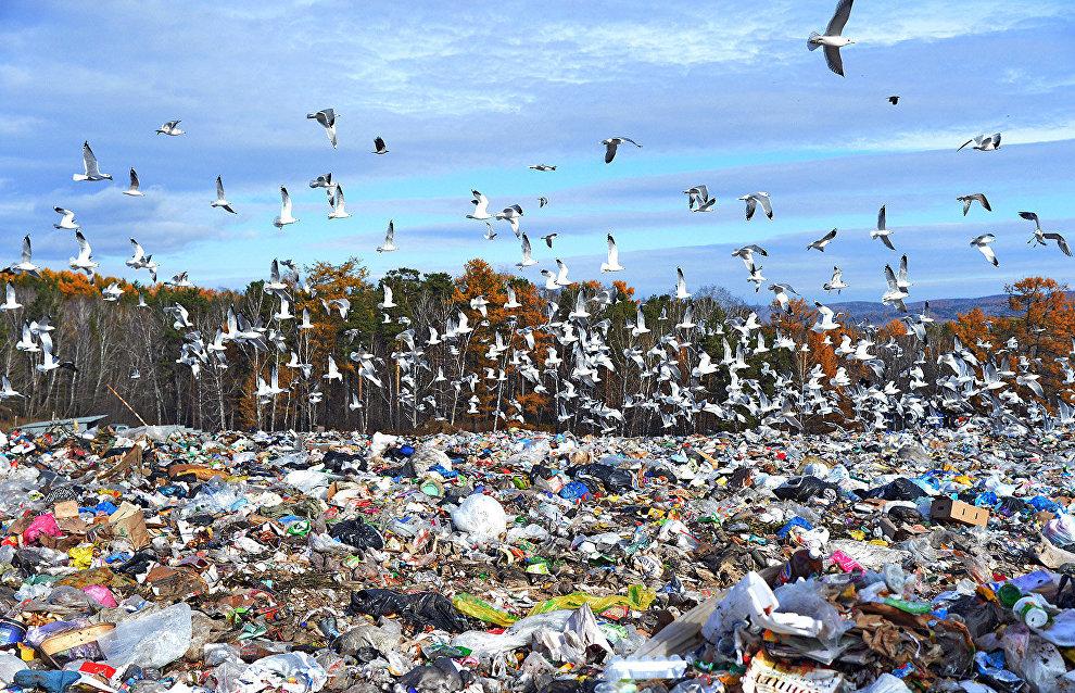 15 illegal waste dumps removed in Arkhangelsk Region