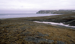 New plant species discovered on Wrangel Island