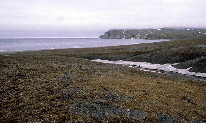 Численность популяции белых гусей на острове Врангеля достигла максимума за полвека