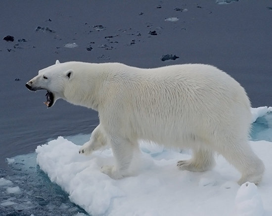 The master of the Arctic
