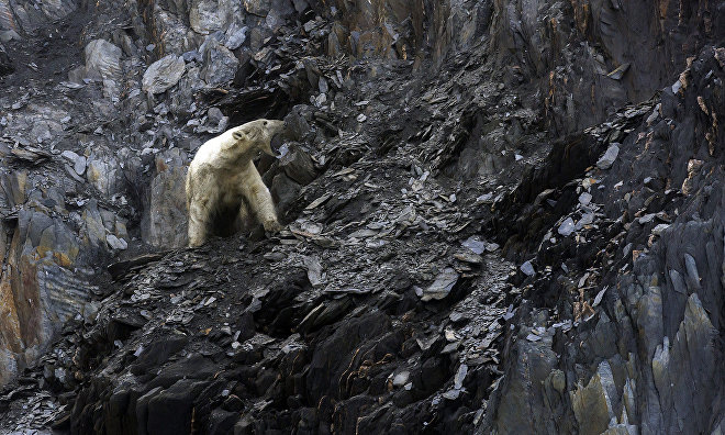 WWF assesses progress under polar bear conservation plan