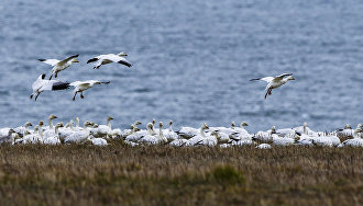 Prosecutor General's Office to punish violators of Arctic environmental laws