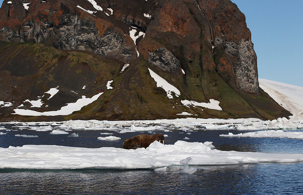 Russian Arctic research and education center to unite three Arctic regions