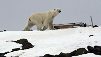The Russian Arctic: How to survive among the bears