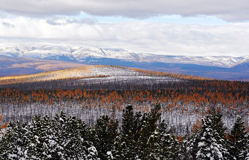 Republic of Sakha (Yakutia) could see new Novosibirsk Islands sanctuary