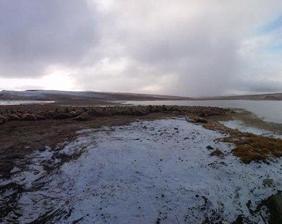 Бухта Кенискун - самое большое в мире лежбище моржей
