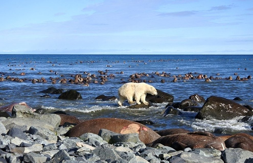 Warm days have come to the Arctic