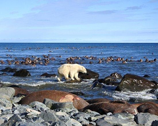 В Арктике наступило потепление