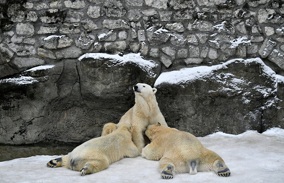 Moscow Zoo to open climate-controlled Arctic and Amazonia pavilions