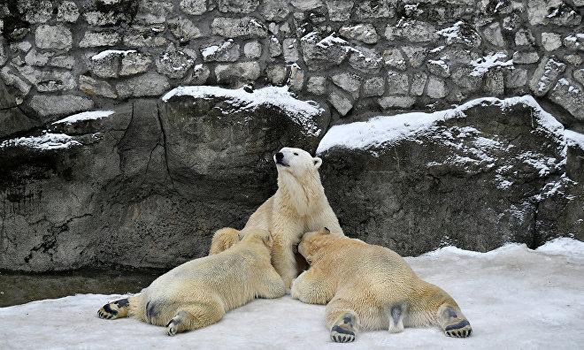 В Московском зоопарке появятся павильона «Арктика» и «Амазония» с климатическим управлением