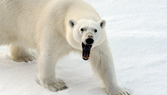 Экспедиция Национального парка Русская Арктика