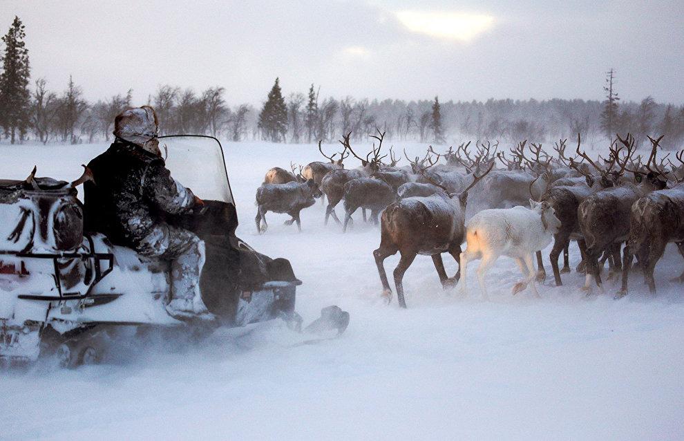 В Якутске предложили создать центр подготовки оленеводов