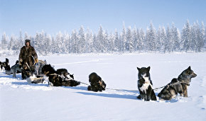 Yakutia plans to restore Yakutian Laika population
