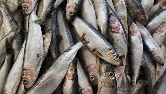 Проблемы рыболовства в Арктике обсудят на международной конференции в Мурманске