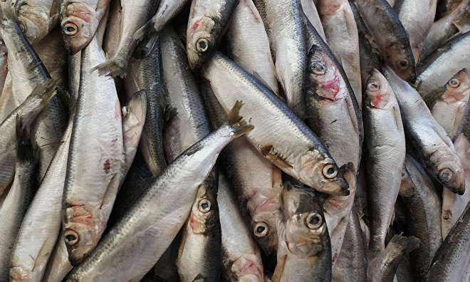 Arctic fishery issues to be discussed at international conference in Murmansk