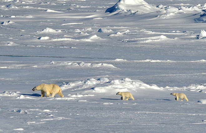 The Arctic: Territory of Dialogue Forum and Russian Arctic National Park to launch joint project
