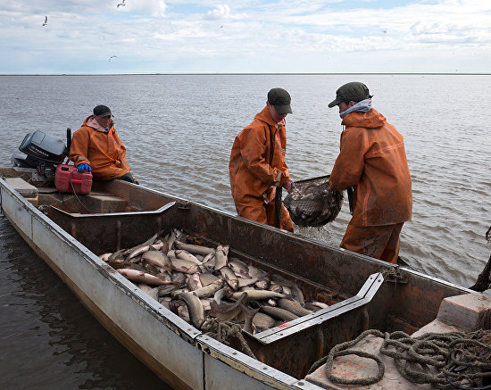 Almost every family has a so-called summer place: a house on the riverbank where they move for the season to catch fish professionally: with nets, all day, every day