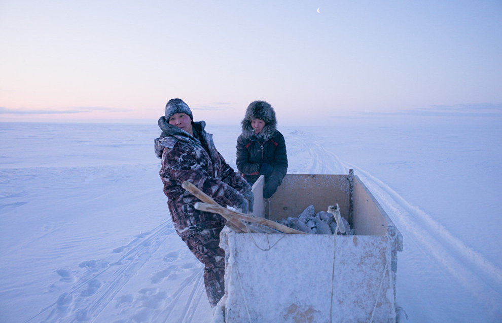 They leave the burbot they catch near ice holes to feed the Arctic foxes