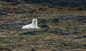 Arctic scientific center to study polar bears and whales opens in Chukotka