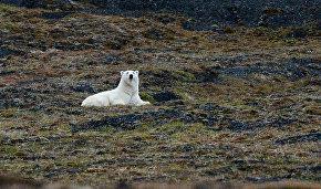 На Чукотке открылся арктический научный центр для исследования белых медведей и китов