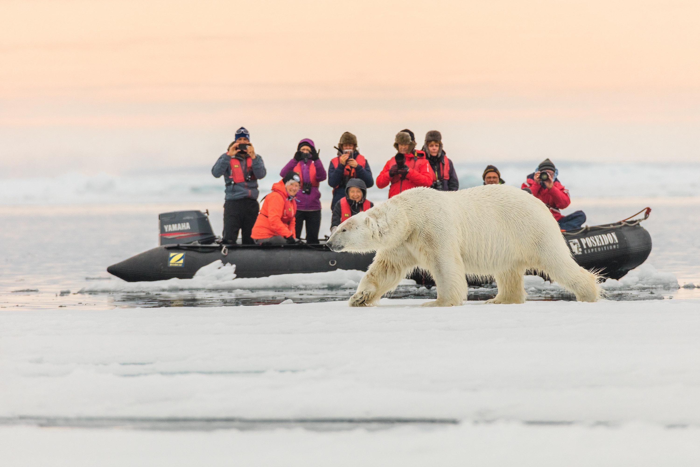 Туристы фотографируют белого медведя, Земля Франца-Иосифа, национальный парк «Русская Арктика»