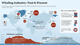 Whaling Industry: Past & Present