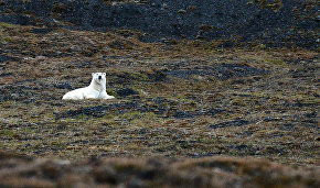 Rosprirodnadzor launches project to protect polar bears