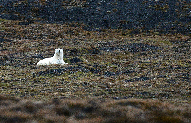 Infections seep into the Arctic endangering fauna – researchers