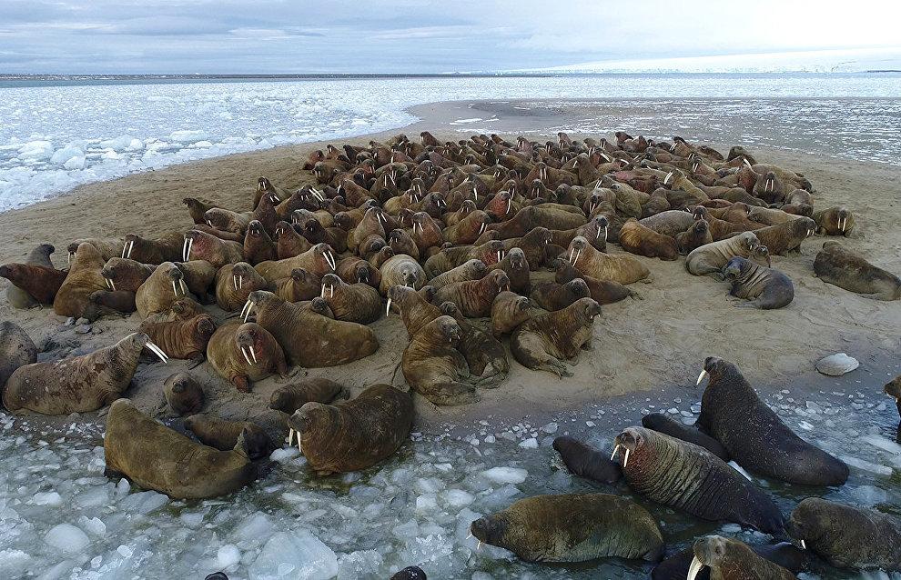 В Рованиеми начался Конгресс по арктическому биоразнообразию