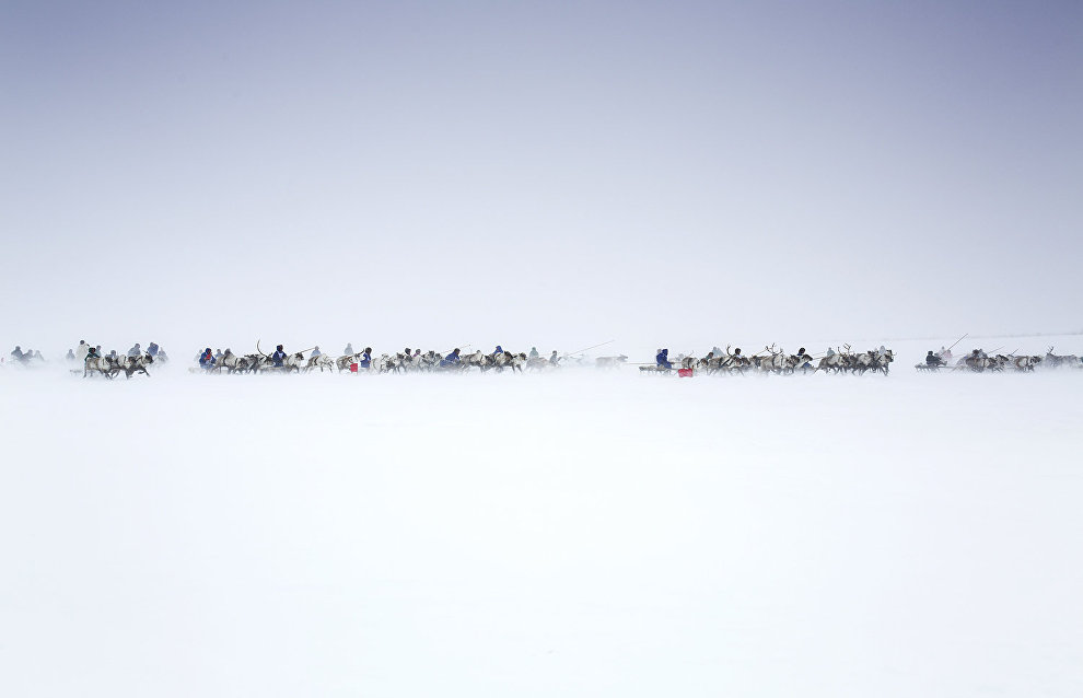 The start of a reindeer sled race to mark the beginning of the winter. The village of Tukhard, Taimyr